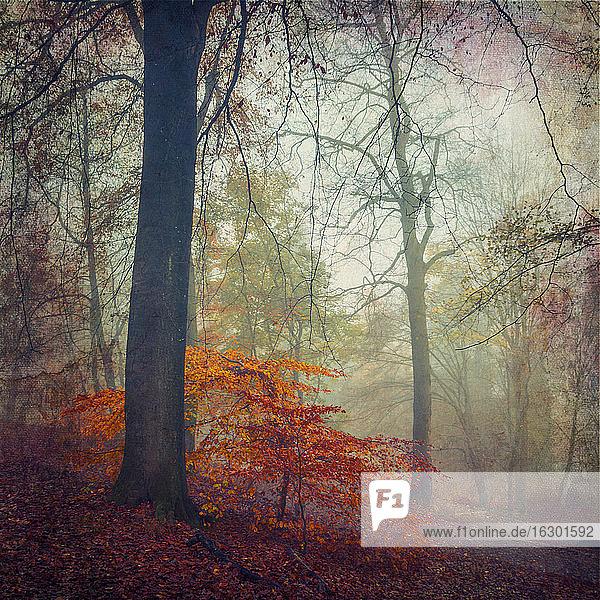 Wald im Herbst  Entfremdung