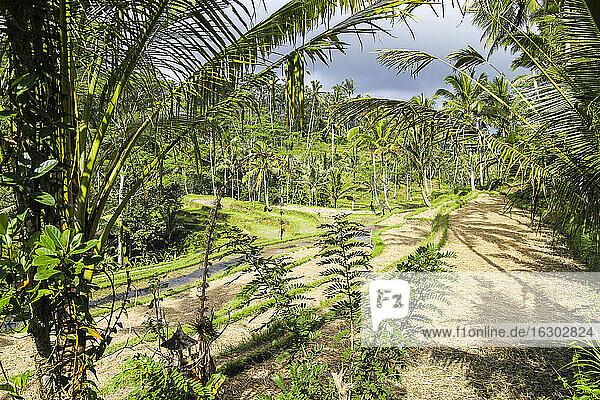 Indonesia  Bali  Tampaksiring  Vegetation
