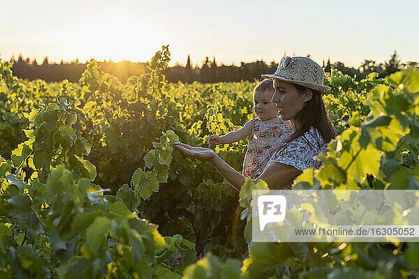 Mother holding her daughter in a vineyard at sunset in Provence  France