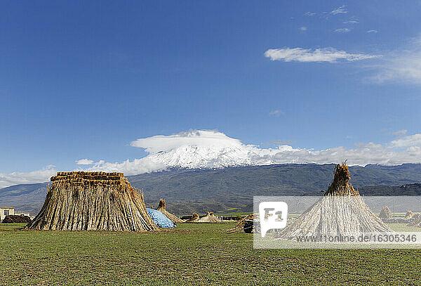 Turkey  Eastern Anatolia  Agri Province  Village Barindi near Dogubayazit  Mount Ararat  Reed on meadow