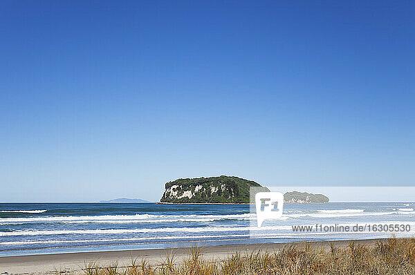 New Zealand  Coromandel  Whangamata Beach