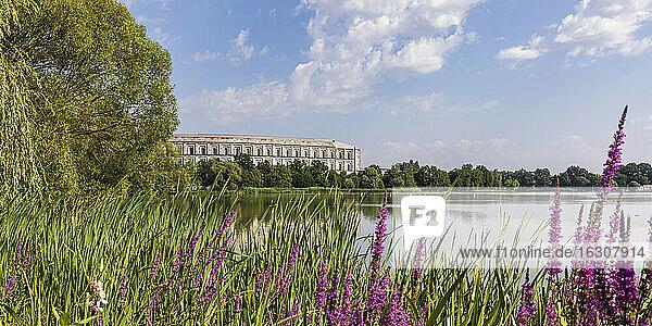 Germany  Bavaria  Nuremberg  Purple wildflowers blooming on grassy lakeshore in Volkspark Dutzendteich park with Congress Hall in background