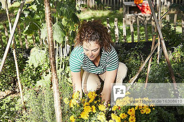 Young brunette woman gardening