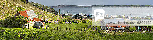 New Zealand  Chatham Island  Waitangi  Sheep farm
