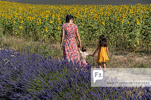 Mother with daughters walking between lavender and sunflower field during summer