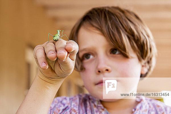 7-jähriger Junge mit einer Gottesanbeterin