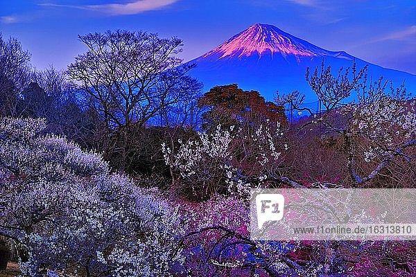 Shizuoka Prefecture  Japan