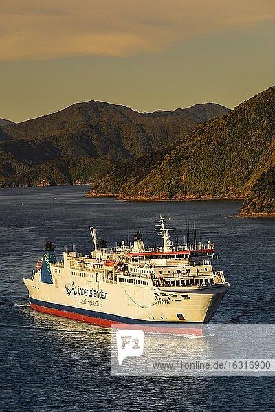 Ankommende Fähre von der Nordinsel bei Sonnenuntergang,  Picton,  Marlborough Sounds,  Südinsel,  Neuseeland,  Ozeanien