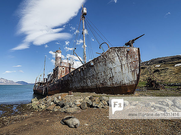 Rusting catcher boat at the abandoned Norwegian whaling station at Grytviken  East Cumberland Bay  South Georgia  Polar Regions