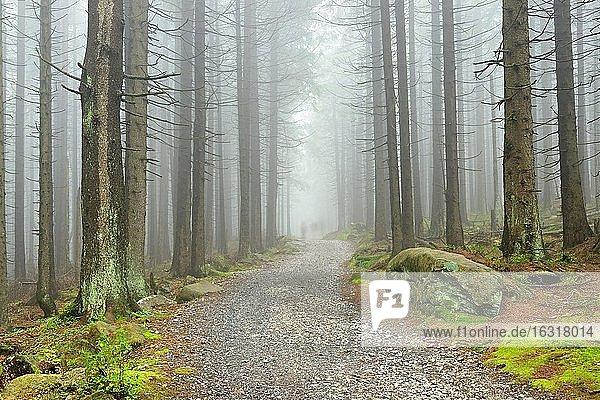 Wanderweg windet sich durch nebligen Fichtenwald,  hinten die verschwommenen Silhouetten von Wanderern,  Nationalpark Harz,  bei Schierke,  Sachsen-Anhalt,  Deutschland,  Europa