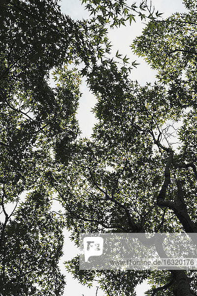 View from below tree canopy  Shinjuku Gyoen Park  Tokyo  Japan