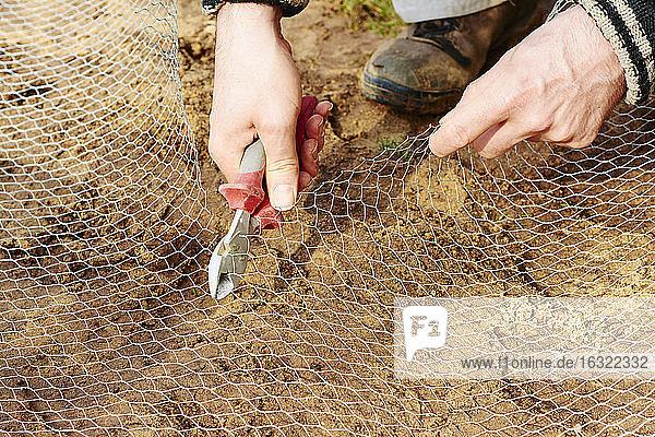 Gärtner schneidet einen Hühnerdraht Gärtner schneidet einen Hühnerdraht