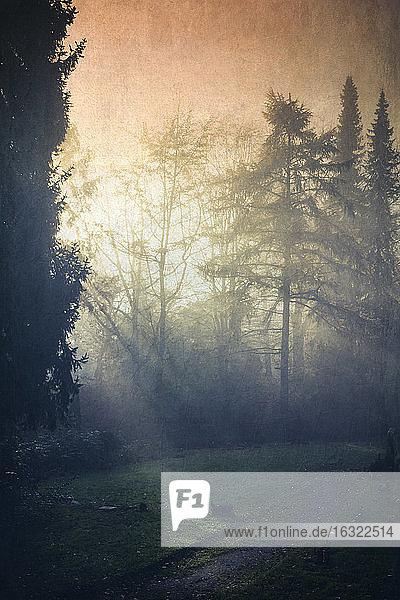 Deutschland  Waldlichtung im Morgenlicht