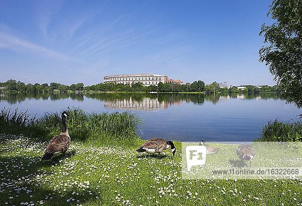 Germany  Bavaria  Nuremberg  Documentation Center Nazi Party Rally Grounds  Dutzendteich  canada geese