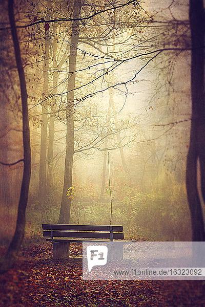 Bank am Herbstmorgen