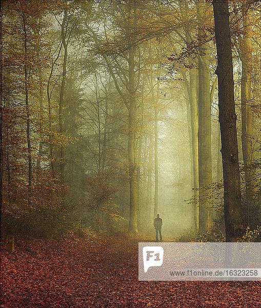 Spaziergänger im herbstlichen Wald
