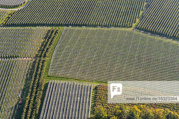 Germany  Aerial view of orchards near Ailingen