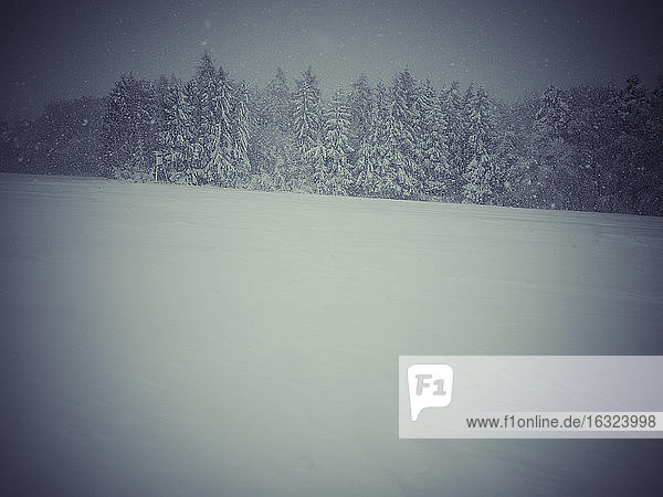 Germany  Black Forest  winter landscape in stormy weather