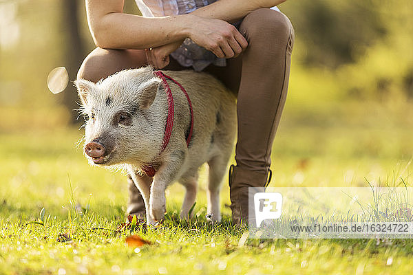 Piglet and woman in park