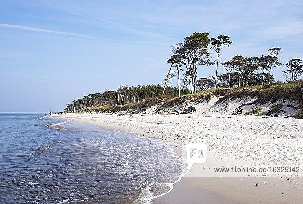 Germany  Mecklenburg-Western Pomerania  Baltic Sea beach in Born auf dem Darss