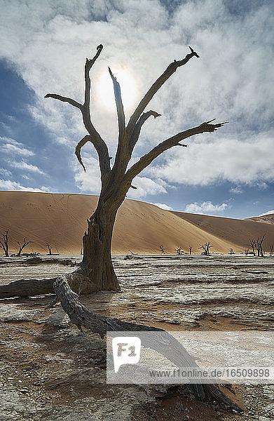 Namib-Naukluft-Nationalpark  Namibia  Südafrika  Afrika