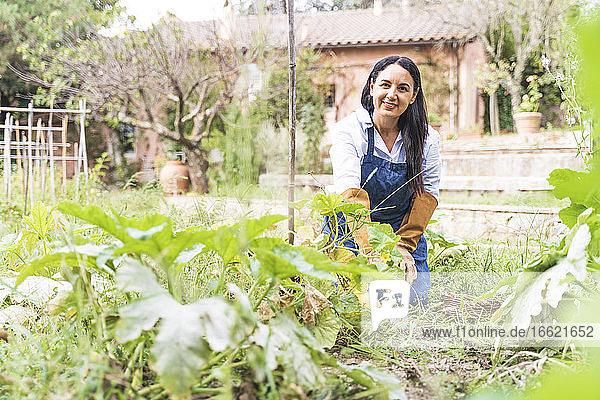 Smiling mature woman kneeling while harvesting vegetables in garden