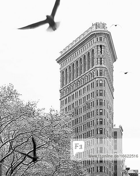 USA  New York  New York City  Flatiron Building with bare trees covered with snow and bid in foreground  bw
