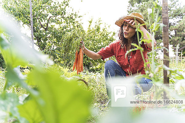 Beautiful woman wiping sweat while harvesting organic carrots at vegetable garden