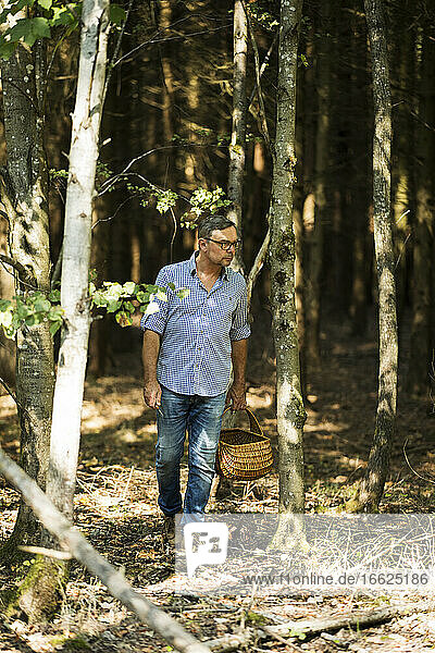 Mature man standing while holding basket looking for mushroom in forest on sunny day
