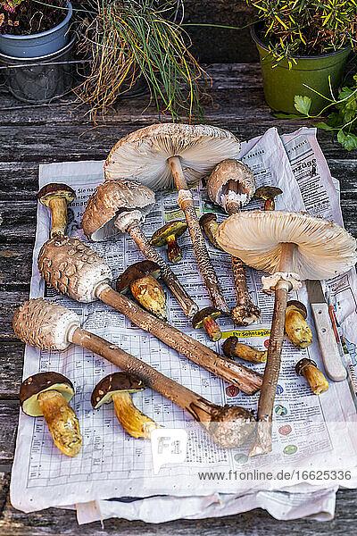 Freshly picked mushrooms lying on newspaper