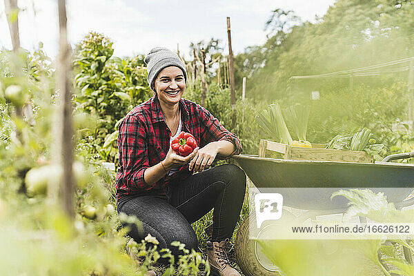 Smiling woman holding red bell pepper while crouching by wheelbarrow in vegetable garden