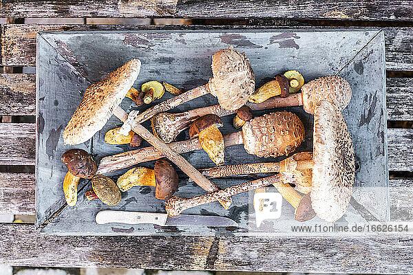 Freshly picked mushrooms inside old crate