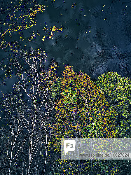 Directly above view of fallen trees floating on lake after storm