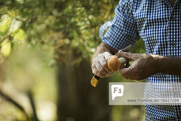 Close-up of man cutting mushroom with knife in forest