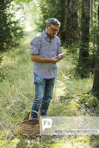Mature man looking at mushroom while standing in forest