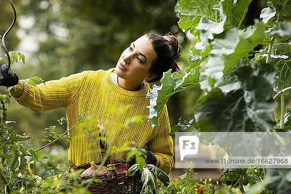 Woman with basket examining plant while standing at urban garden