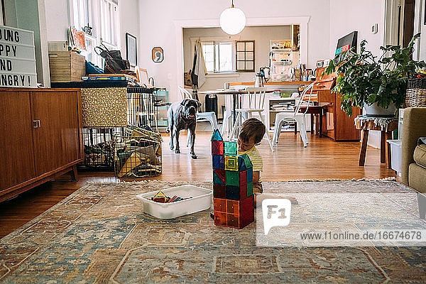 Young boy building a tower with magnet tiles while dog watches