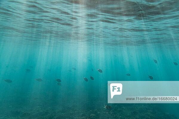 a school of fish swim through light streaks beneath ocean surface