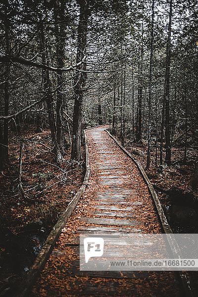 Alter Holzsteg durch uralten Wald Baxter State Park  Maine