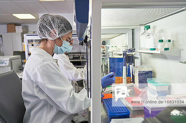 Female scientist filling pipette trays at fume hood in laboratory