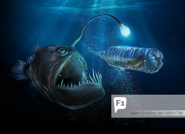 Scary deep sea fish with light examining fish in plastic water bottle