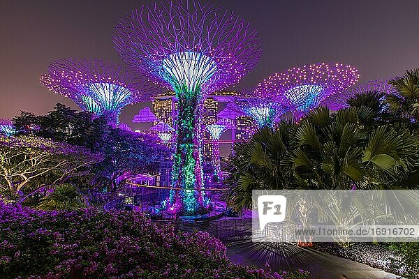 Supertrees bei Nacht  Supertree Grove  Gardens by the Bay  Singapur  Asien