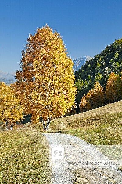 Feldweg im Unterengadin  Schweiz  Europa