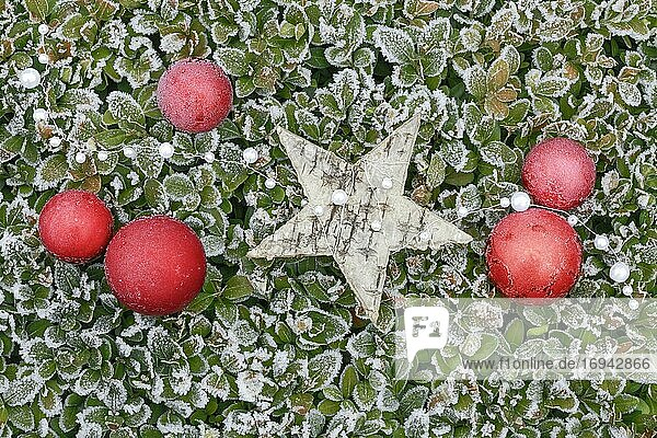 Natürliche Weihnachtsdekoration im Freien