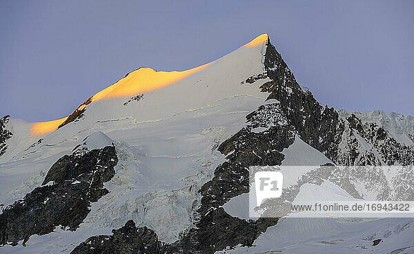 Alpenglühen  erstes Sonnenlicht  Gipfel des Großen Fiescherhorn  Berner Oberland  Schweiz  Europa