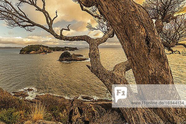 Tepare Point Reserve  Coromandel Peninsula  Waikato  Nordinsel  Neuseeland  Pazifik