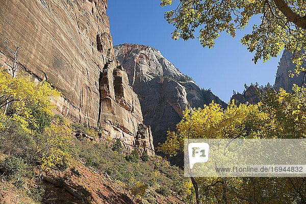 Der Gipfel des Cable Mountain eingerahmt von goldenem Herbstlaub  Zion National Park  Utah  Vereinigte Staaten von Amerika  Nordamerika