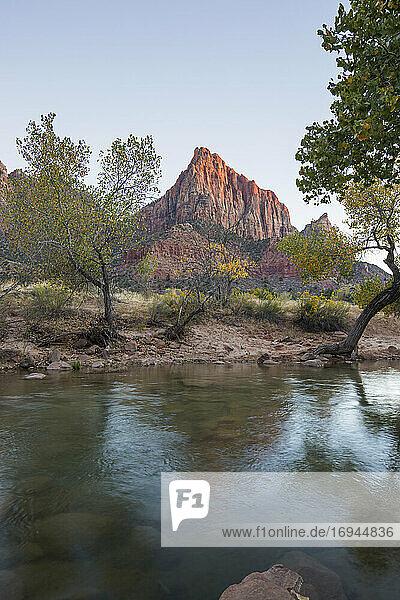 Blick vom Pa'rus Trail über den Virgin River zum Watchman bei Sonnenuntergang  Herbst  Zion National Park  Utah  Vereinigte Staaten von Amerika  Nord Amerika