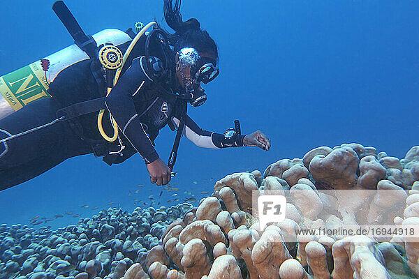Ein Taucher um eine Hartkoralle der Gattung Stylophora an einem tropischen Korallenriff im Gaafu Dhaalu Atoll  Malediven. Indischer Ozean  Asien