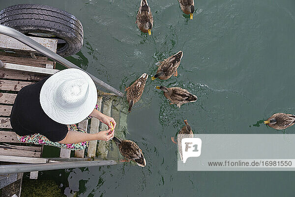 Aerial view of a woman feeding a bunch of ducks on a lake
